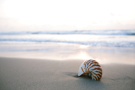 sea beach: nautilus sea shell on golden sand beach with waves in  soft sun rise light, shallow dof