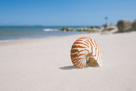 hengistbury: nautilus shell on sandy wind beach and sea waves near Bournemouth, UK. shallow dof