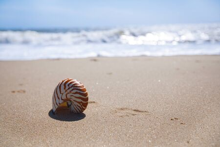 hengistbury: nautilus shell on sand beach and sea waves near Bournemouth, UK. shallow dof