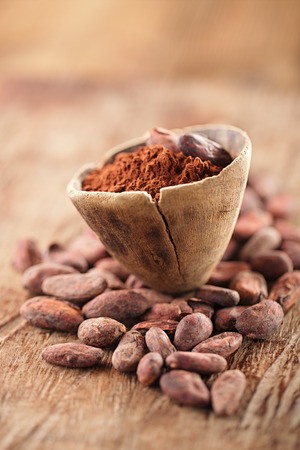 cocoa bean: cocoa powder in spoon on roasted cocoa chocolate beans background
