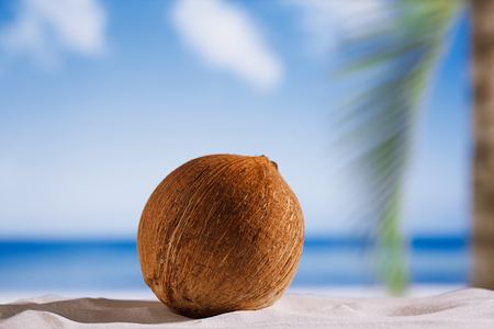 winter escape: coconut with ocean , beach and seascape, shallow dof