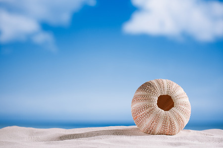 winter escape: sea urchin - nice and colorful  on white sand beach, ocean,  sky and seascape Stock Photo