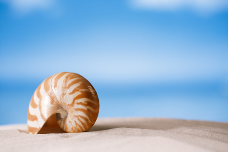 florida beach: nautilus shell on white Florida beach sand under sun light, shallow dof Stock Photo