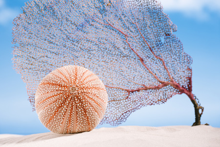 corall: sea urchin sea urchin  and coral  - nice and colorful  on white sand beach, ocean,  sky and seascape Stock Photo