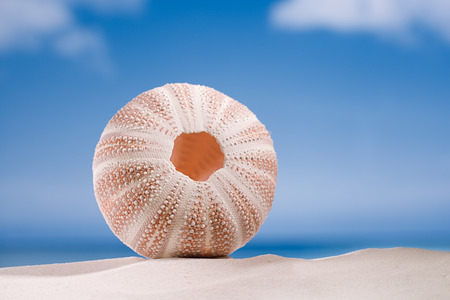 urchin: sea urchin - nice and colorful  on white sand beach, ocean,  sky and seascape Stock Photo