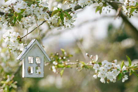 Little wooden house in Spring with blossom cherry flower sakura Stock Photo