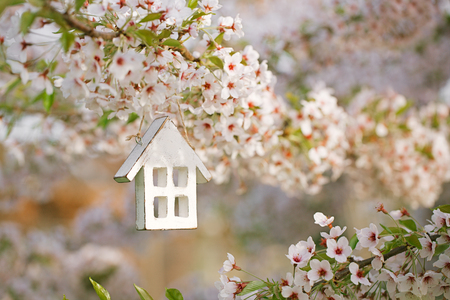 Little wooden house in Spring with blossom cherry flower sakura Stockfoto