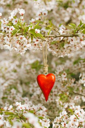 fleur de cerisier: coeur bois au printemps à la fleur de cerise fleurs sakura Banque d'images