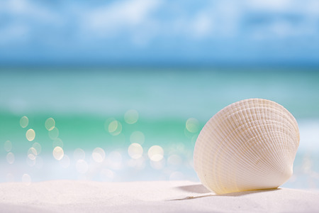 lear: white sea shell  on  beach sand and sea blue background