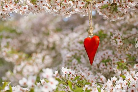 single animal: wooden heart in Spring with blossom cherry flower sakura Stock Photo