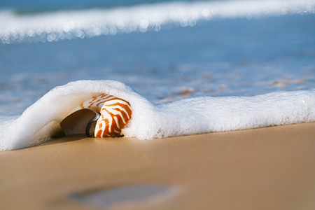 live action: seashell under sea wave on beach, live action