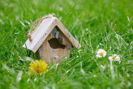 Little Birdhouse in Spring new grass