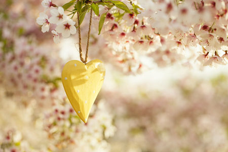 cherry tree: wooden heart in Spring with blossom cherry flower sakura Stock Photo