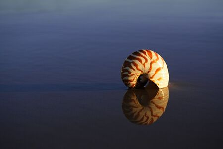 nautilus: seashell nautilus on sea beach under sunset sun light