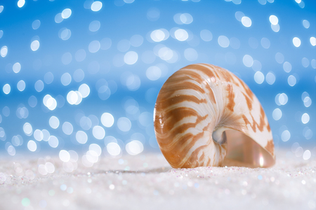 nautilus: nautilus shell on white  glitter and blue background with bokeh