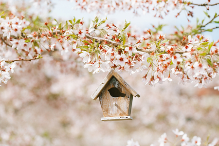 white blossom: Little Birdhouse in Spring with blossom cherry flower sakura