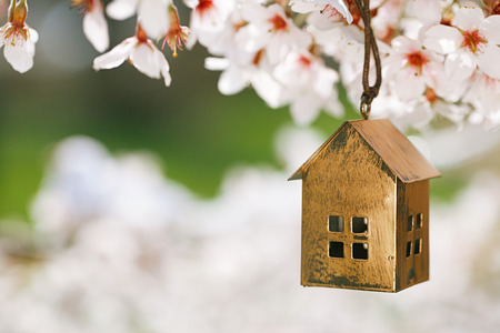 Little house in Spring with blossom cherry flower sakura