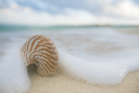 live action: nautilus shell sea waves, live action ... , shallow dof Stock Photo