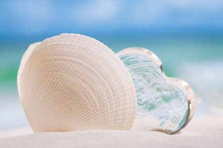 lear: white sea shell  with heart glass on beach and sea blue background Stock Photo