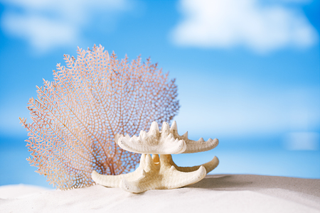 seafan: white starfish and seafan with ocean, beach, sky and seascape, shallow dof Stock Photo