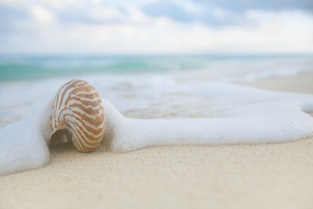 nautilus: nautilus shell sea waves, live action ... , shallow dof Stock Photo