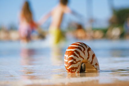 nautilus: sea shell nautilus on swimming pool edge and kid running background, shallow dof Stock Photo