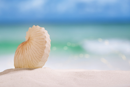 nautilus: nautilus paper shell on white sandy beach under the sun light, shallow dof Stock Photo