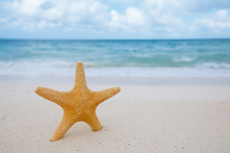 red star: starfish on golden sand beach with waves in  soft sunset light, shallow dof Stock Photo