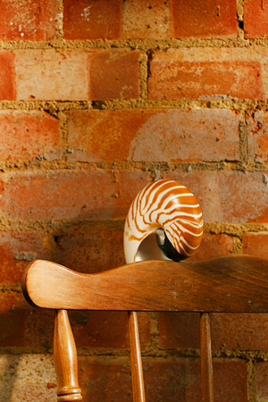 vintage chair: nautilus sea shell in retro style,  vintage chair with old brick wall, shallow dof Stock Photo