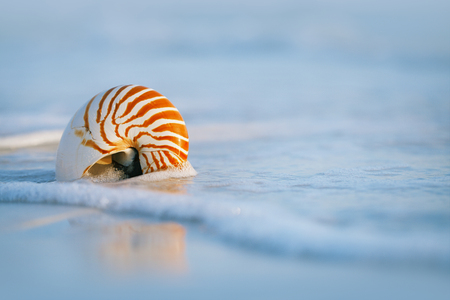 live action: nautilus shell with sea wave,  Florida beach  under the sun light, live action