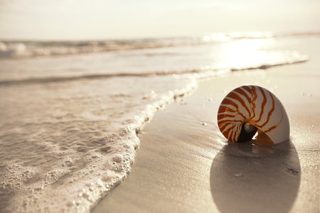 nautilus shell on a sea ocean beach sand with dark sunset light