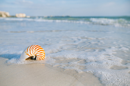 nautilus: nautilus shell with sea wave,  Florida beach  under the sun light, live action