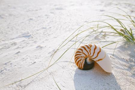 Nautilus, conchiglia sulla spiaggia bianca della Florida sabbia sotto la luce del sole, poco DOF Archivio Fotografico - 60539643