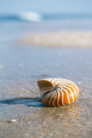 nautilus shell on white Florida beach sand under sun light, shallow dof Stock Photo