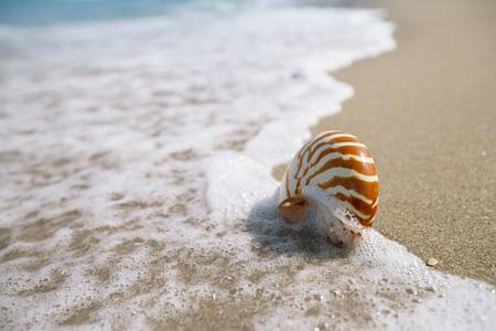 nautilus shell: nautilus shell on white Florida beach sand under sun light, shallow dof Stock Photo
