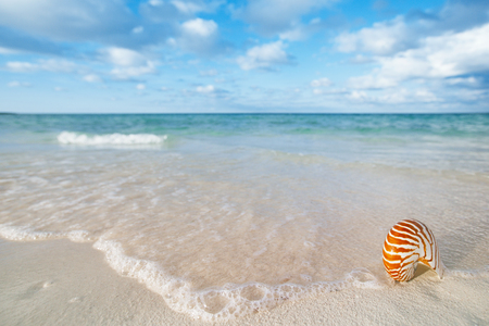 faraway: nautilus shell on white beach sand, against sea waves, shallow dof, soft focus