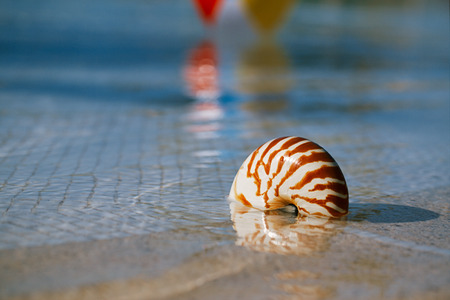 nautilus: sea shell nautilus on swimming pool edge at  resort, shallow dof Stock Photo