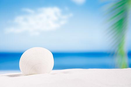 white tropical shell on white Florida beach sand under sun light, shallow dof