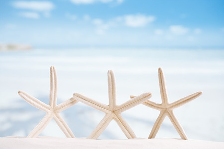 star fish: white starfish with ocean, boat, white sand beach, sky and seascape, shallow dof
