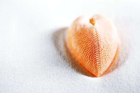 red heart sea shell in beach white sand, shallow dof Stock Photo