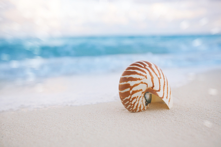 faraway: nautilus shell on white beach sand, against sea waves, shallow dof