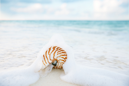faraway: nautilus shell sea waves, live action ... , shallow dof Stock Photo