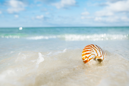 nautilus shell sea waves, live action ... , shallow dof Stock Photo