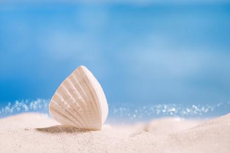 weißen tropischen Shell auf weißem Florida-Strandsand unter Sonnelicht, flachen DOF
