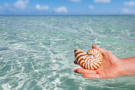 faraway: nautilus shell holding by mens hand, seascape, live action Stock Photo