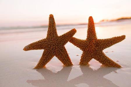 live action: starfish shell on beach in sunrise light, seascape, live action