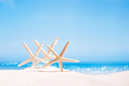 하얀 모래 해변, 하늘과 바다, 얕은 dof 바다와 하얀 불가사리
