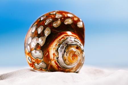 tropical seashell sea shell with ocean , beach and seascape, shallow dof Stock Photo