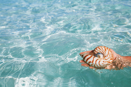 nautilus shell in hand and blue sea waves, seascape, live action Stock Photo