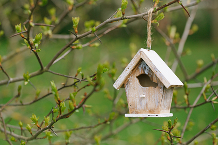 Little Birdhouse in Spring new leaves Stockfoto